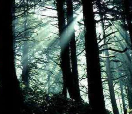 CONFÉRENCE - La forêt et le défi climatique